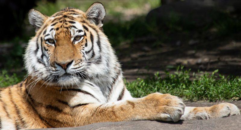 Zoo Pomerode com hospedagem no Hotel Glória